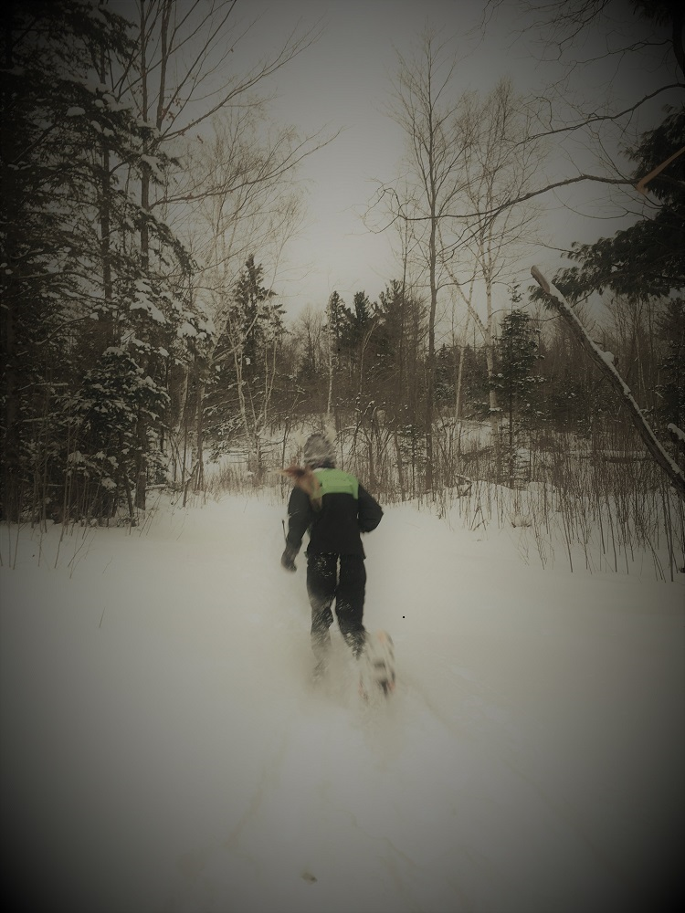 kids trail running snowshoe running on dion snowshoes